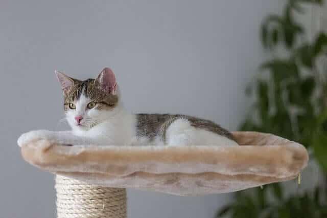 Arbre à chat pour sieste