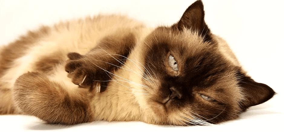 choisir ses croquettes pour chat