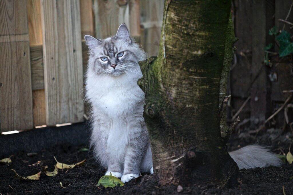 taille d'arbre à chat