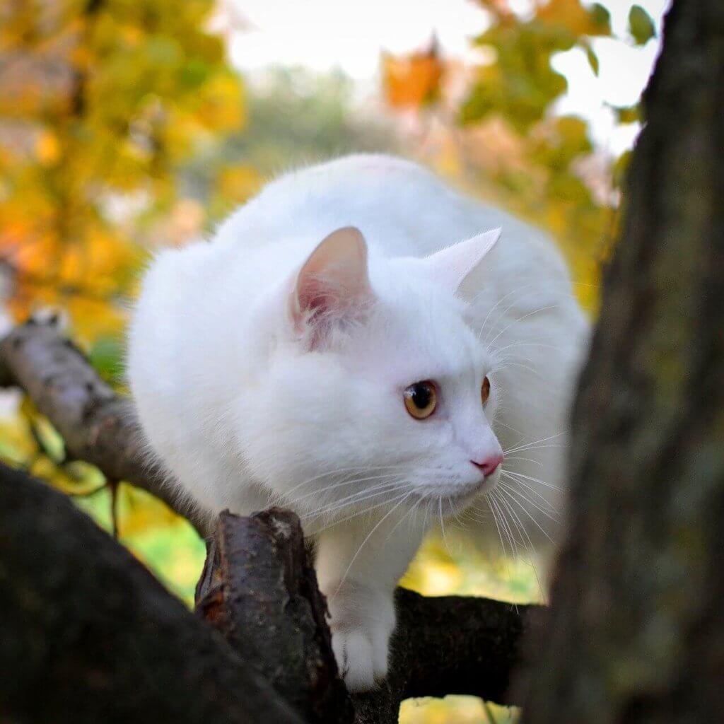 arbre à chat avec chat blanc