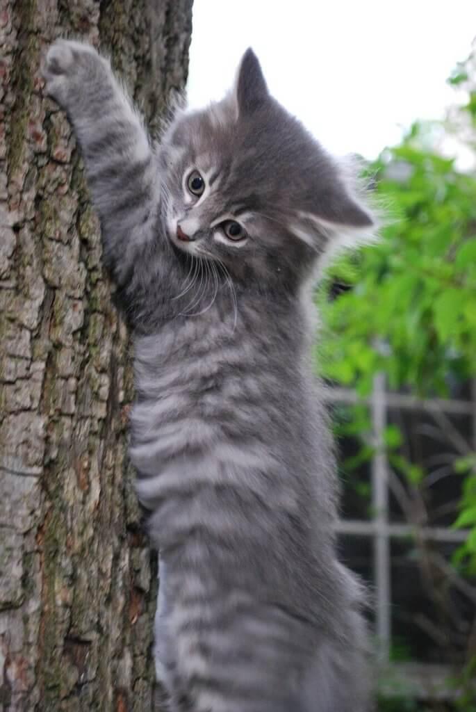 arbre à chat petit chat