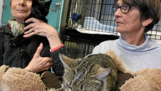 chiens chats et cie refuge nantes